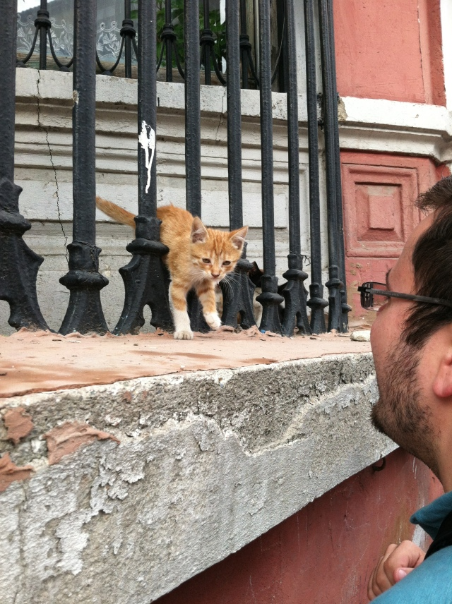 I can't tell you how enthusiastic Chris was during our whole trip with all the stray animals - here he is with a kitten.
